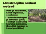 l histroopika niisked metsad15
