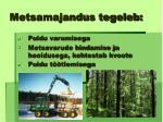 metsamajandus tegeleb