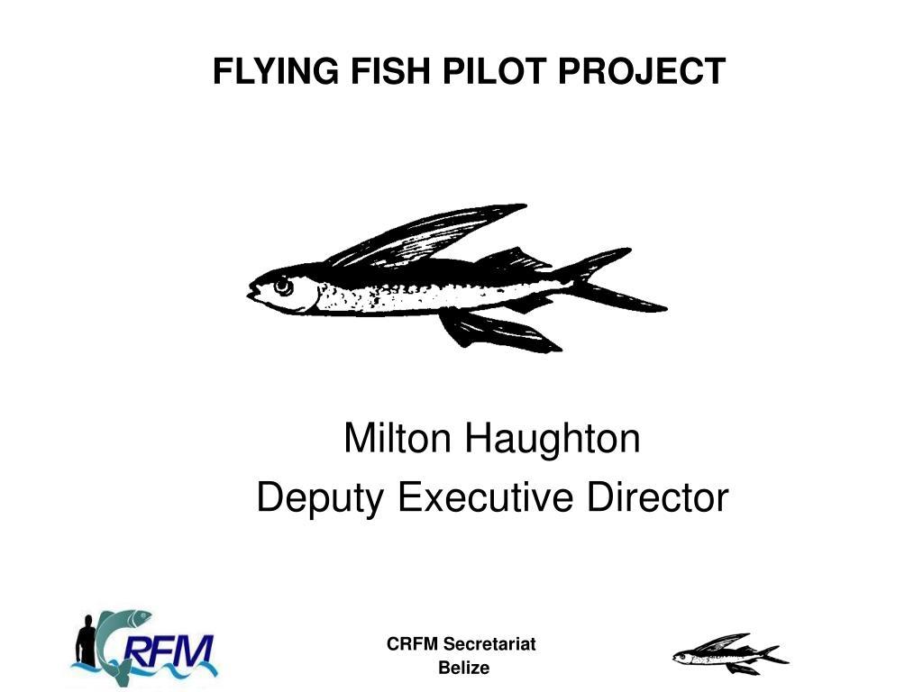 flying fish pilot project l.