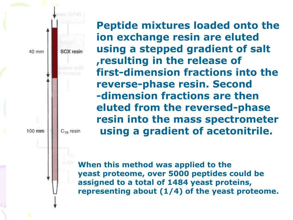 Peptide mixtures loaded onto the