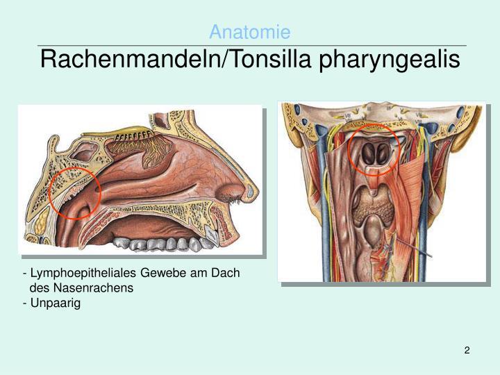 PPT - Universität zu Köln Seminar HNO-Heilkunde PowerPoint ...