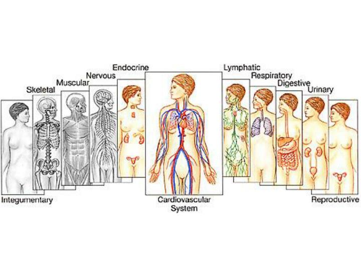 Bodies and bodily systems