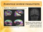 anatomical cerebral measurments