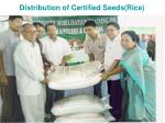 distribution of certified seeds rice