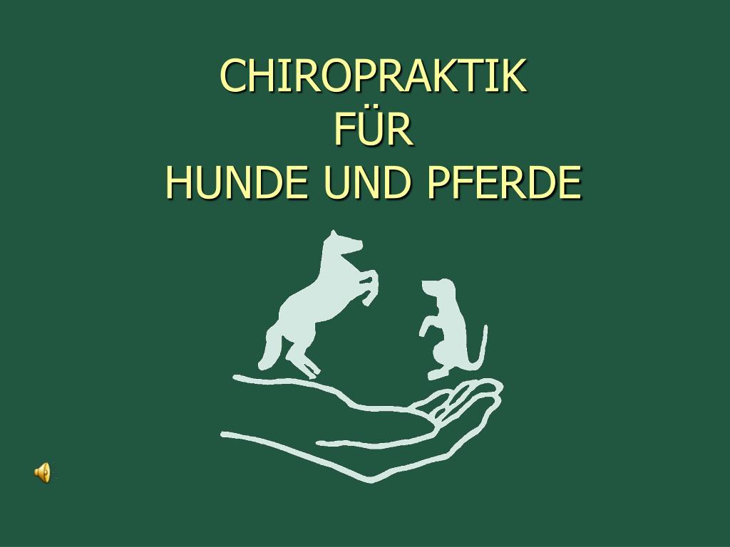 chiropraktik f r hunde und pferde l.