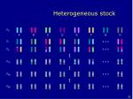 heterogeneous stock31