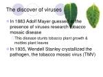 the discover of viruses