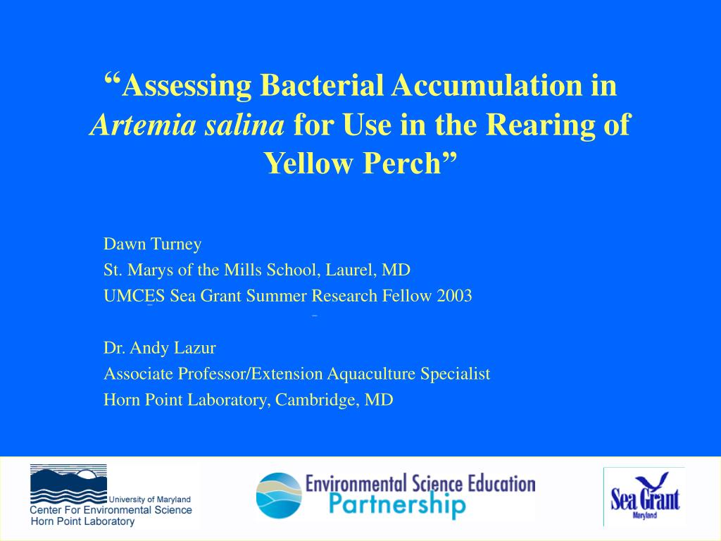 assessing bacterial accumulation in artemia salina for use in the rearing of yellow perch l.