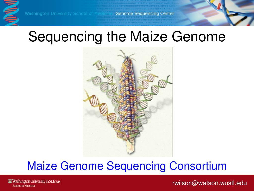 sequencing the maize genome l.