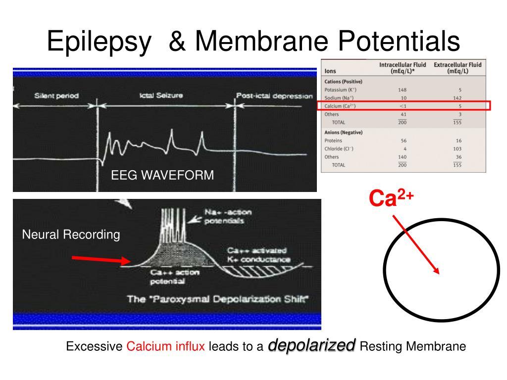 epilepsy membrane potentials l.