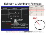 epilepsy membrane potentials