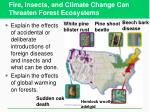 fire insects and climate change can threaten forest ecosystems