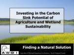 investing in the carbon sink potential of agriculture and wetland sustainability