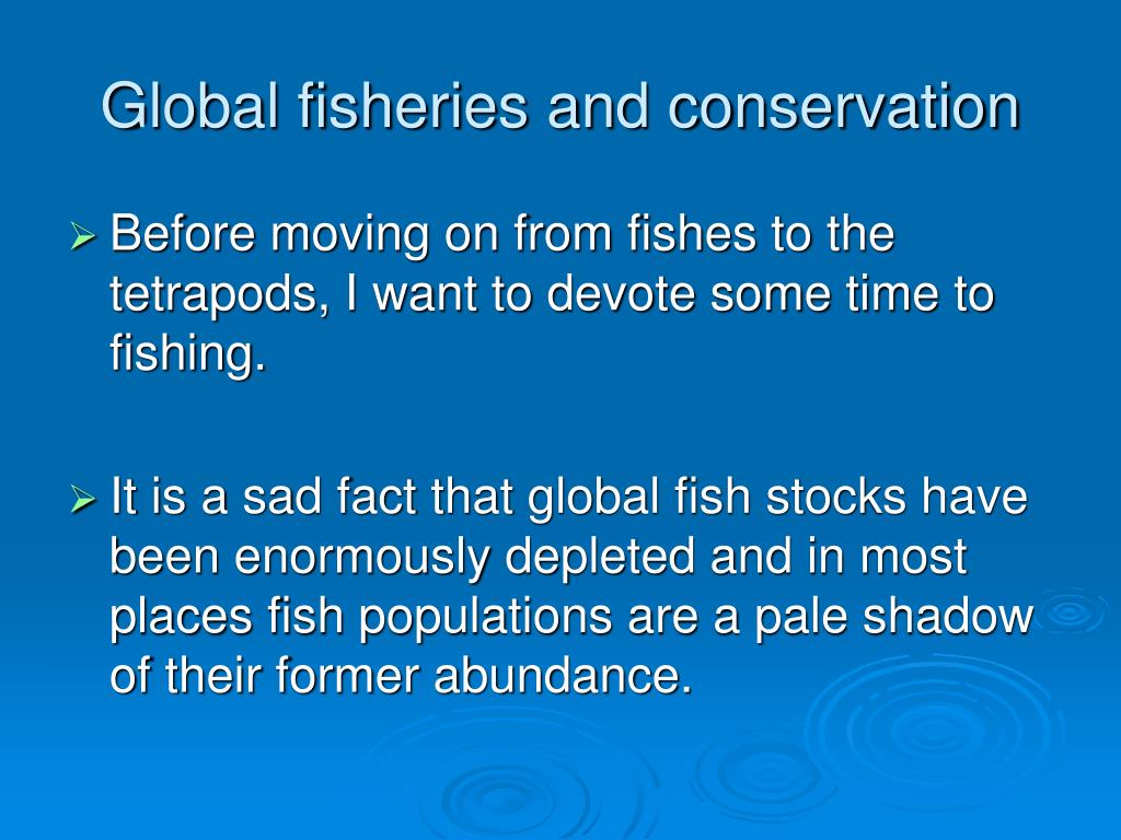 global fisheries and conservation l.