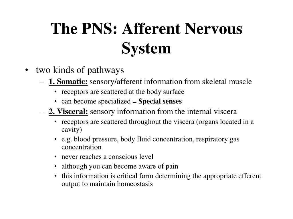 the pns afferent nervous system l.