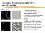 a special myosin is required for t gondii motility
