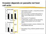 invasion depends on parasite not host cell actin