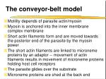 the conveyor belt model