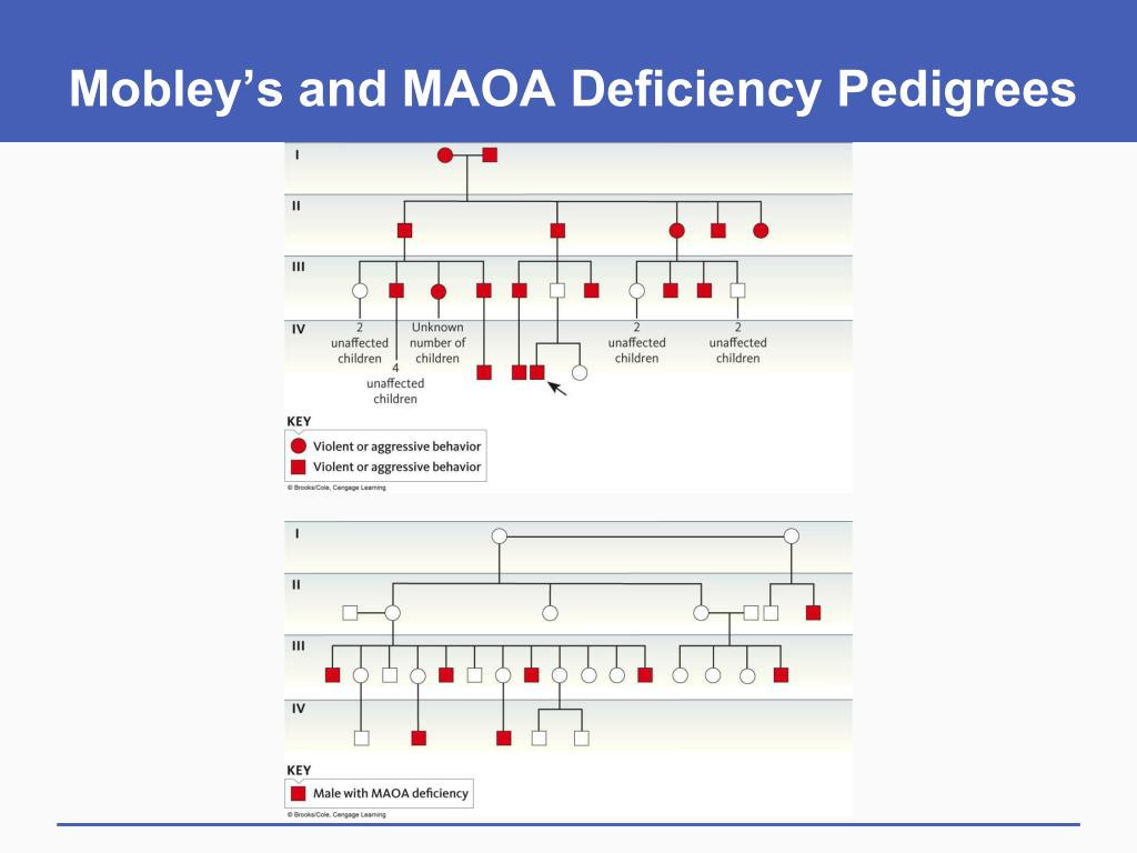 Mobley's and MAOA Deficiency Pedigrees
