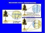 mecanismo pasivo transpiracion
