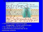 ra z v as de movimiento del agua acuaporinas