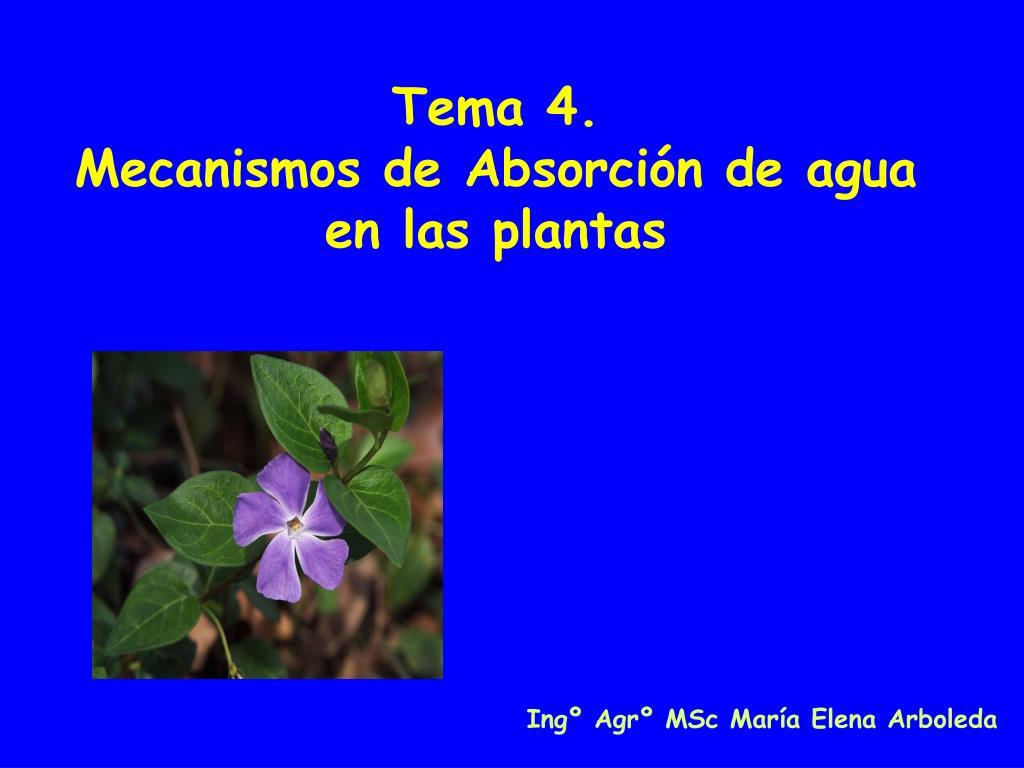 tema 4 mecanismos de absorci n de agua en las plantas l.