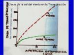 efecto de la vel del viento en la transpiraci n