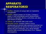apparato respiratorio10
