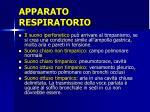 apparato respiratorio4