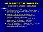apparato respiratorio7