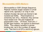 microsatellite ssr markers