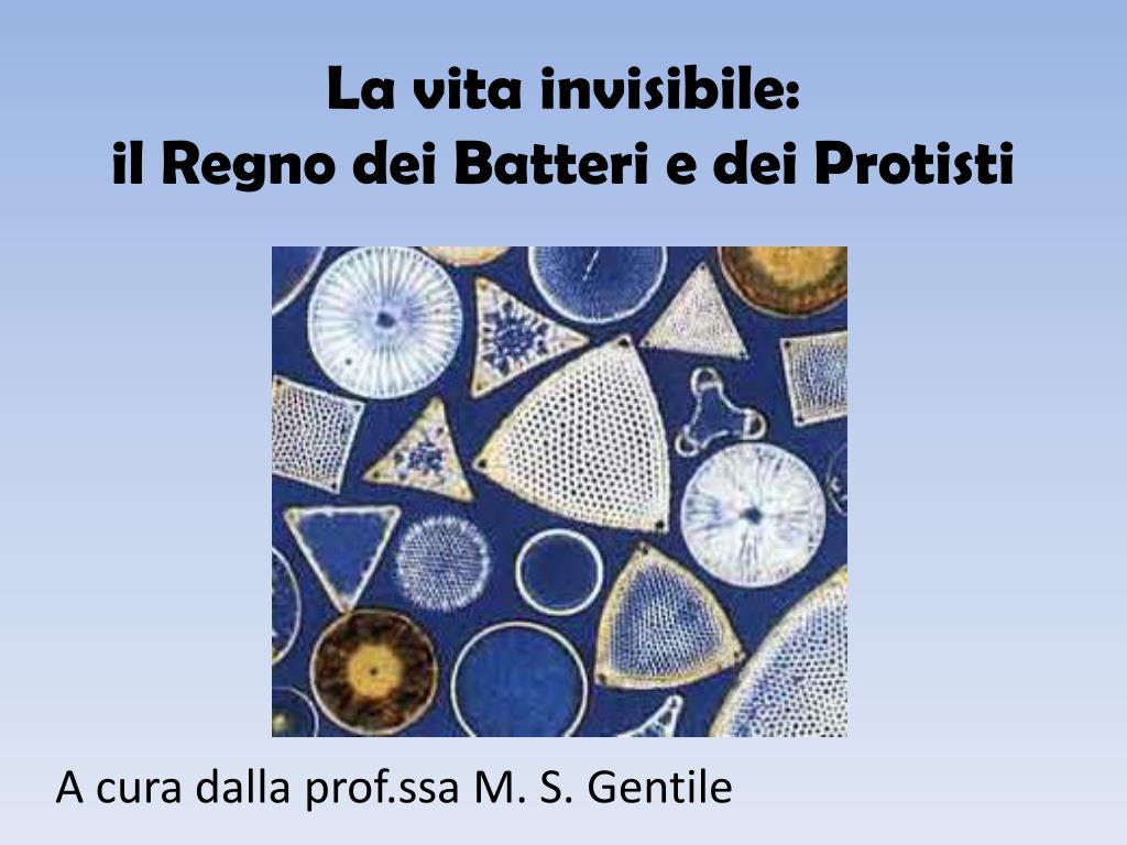 la vita invisibile il regno dei batteri e dei protisti l.