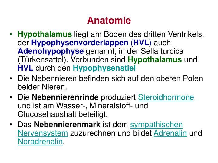 PPT - Nebennieren-Hypophyse-Hypothalamus Achse Stufendiagnostik ...