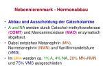 nebennierenmark hormonabbau