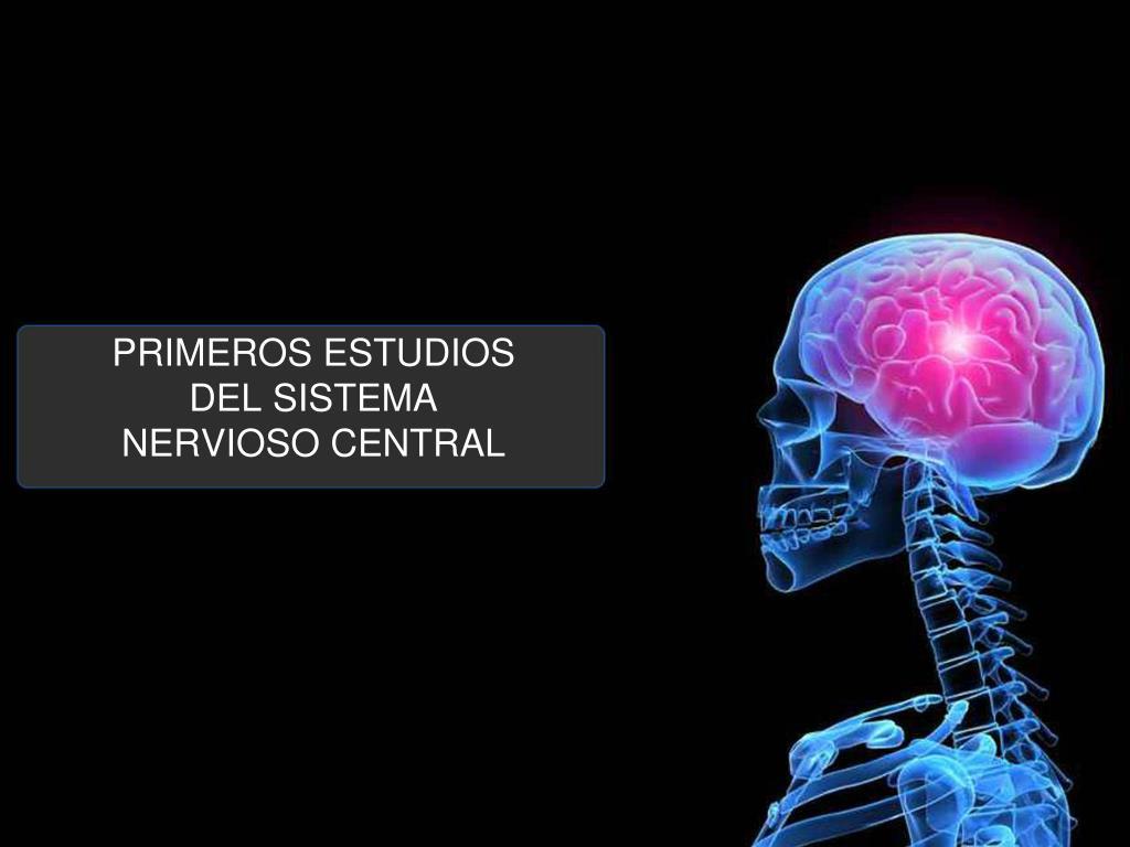 primeros estudios del sistema nervioso central l.