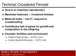 terminal crossbred female