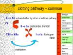 clotting pathway common