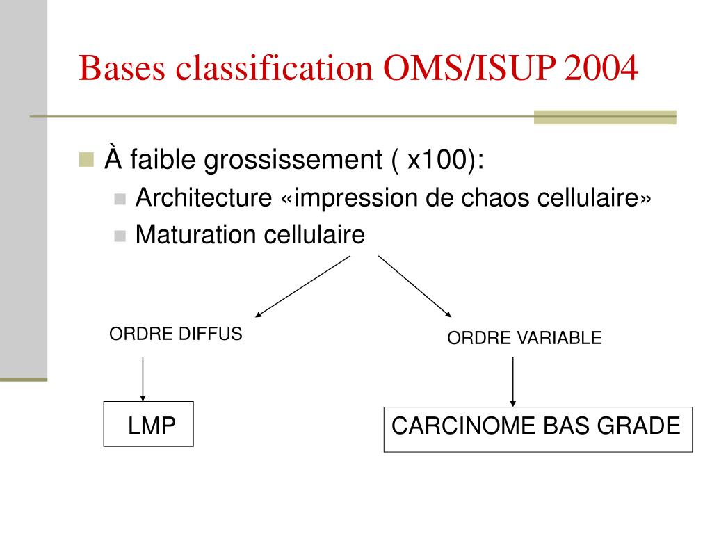 Bases classification OMS/ISUP 2004