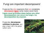 fungi are important decomposers
