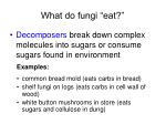 what do fungi eat