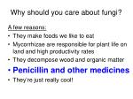 why should you care about fungi39