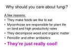 why should you care about fungi43