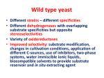 wild type yeast