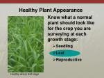 healthy plant appearance3