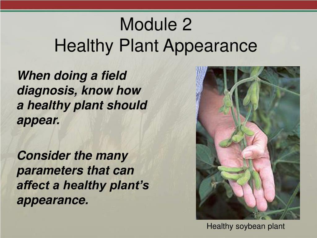 module 2 healthy plant appearance l.