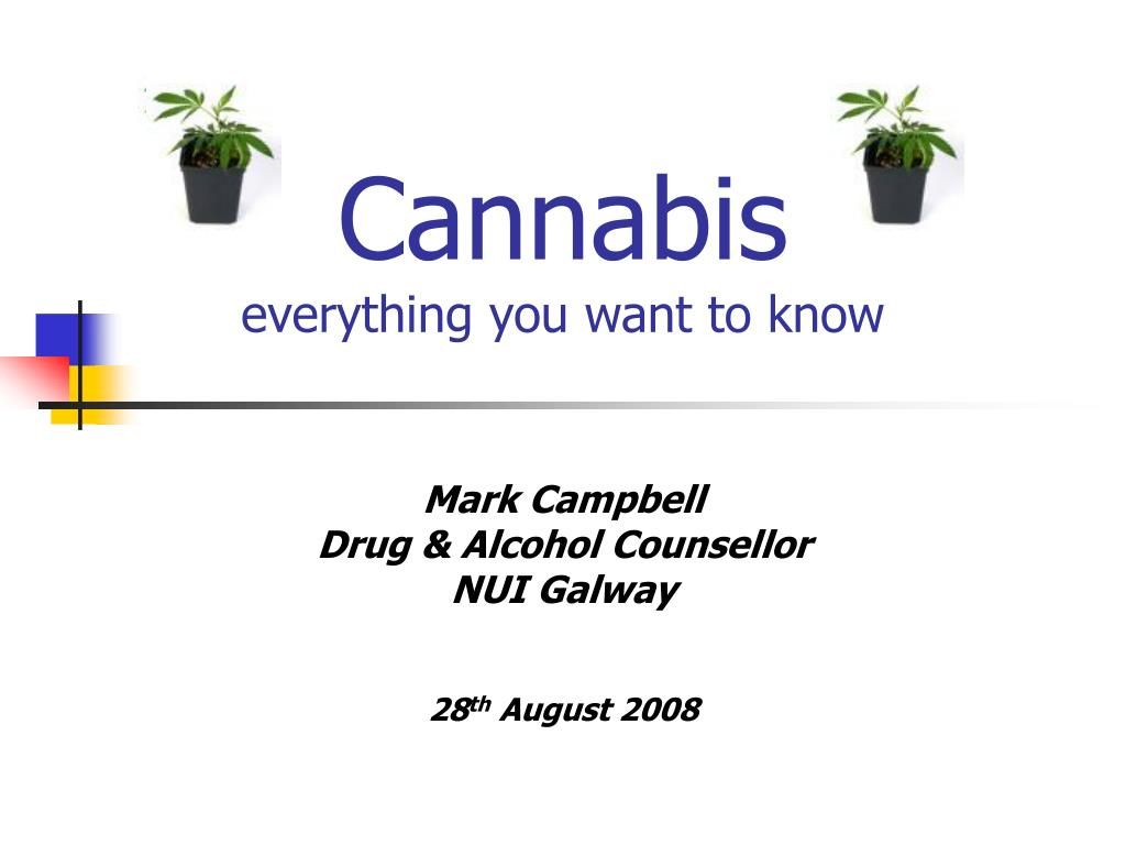 cannabis everything you want to know l.