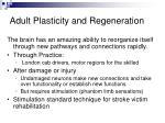 adult plasticity and regeneration