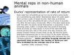 mental reps in non human animals1