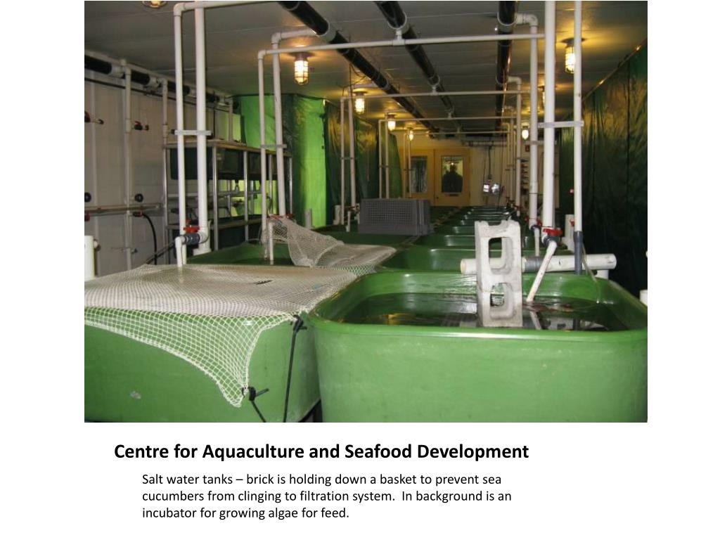 Centre for Aquaculture and Seafood Development