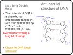 anti parallel structure of dna